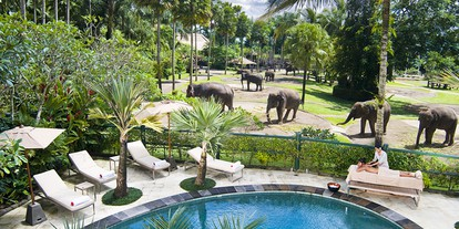 Swimming Pool and Elephant Park